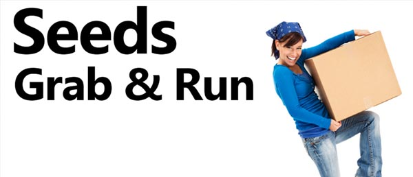 Volunteers needed for Seeds Church Fall Grab & Run – Nov. 3 & 4