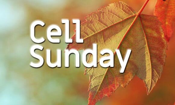 Seeds Cell Sunday this Sunday, Oct 4 @ 10 am