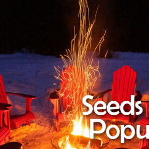 Seeds Pop-up Cell on Zoom this Sunday, Feb. 28, 2021 @ 11am