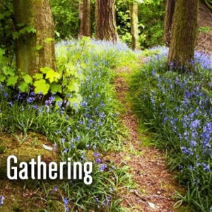Seeds in-person Worship Service on Sunday, April 18 @ 10:45 am.